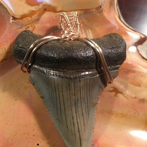 Jewelry - Megalodon wire wrapped tooth